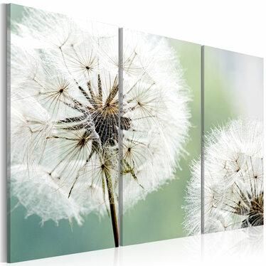 Dandelions 3 Piece Canvas Print 60x40 cm